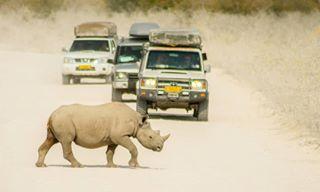 safari africa tamronlens namibia chameleonsafaris etoshaexplorer nature etosha savetherhino rhyno wildlife nikond3400