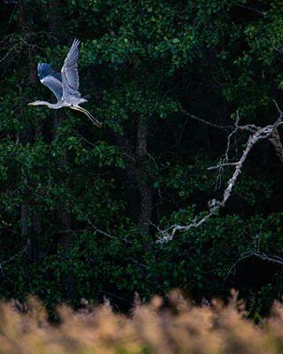 archipelago bird birdphotography birdwatching finland nikon storch
