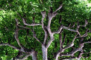 canon canon_photos focus green greenscreen instagood nature photographer photography photoofday photooftheday pic picoftheday picture spring springtime tree
