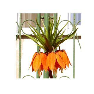 photographing photography bells flowers instafamous garden orange townlife nature orangeflower instaphoto squarephoto orangeflowers photo flower bell photographer square