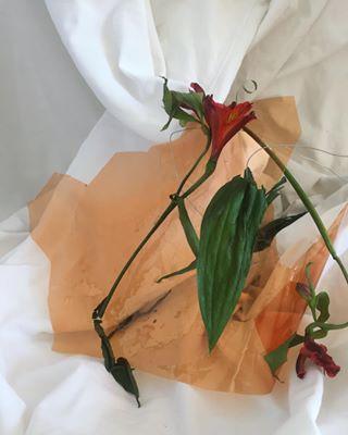 stilllife filter fineart foil thesmartview material ukraine white east dying poland tsv_botanicvibes orange flowers