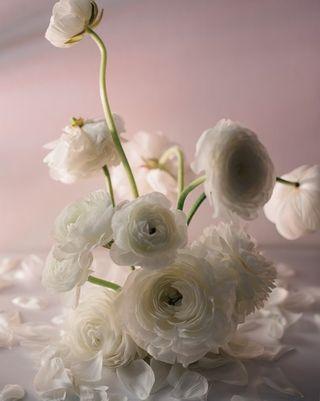 amsterdam fotograaf frame onwall print ranunculus white arrangement photography product stilllife