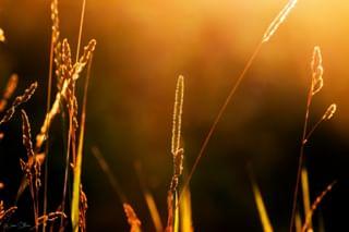grass sunlight field summer nature sunset closeup warm outdoors plants day