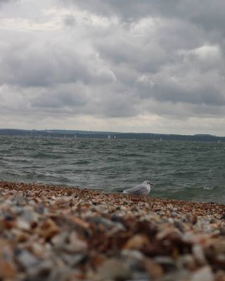 southampton bird summeriscancelled ocean photography shots endofsummer beautiful waves lens overcast selfie travels rocks seagull nofilter isleofwight 50mm flashback canon stones memories photographer