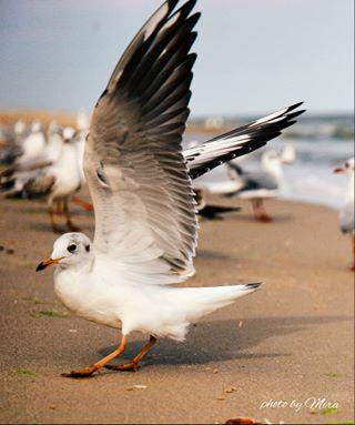nationalgeographic fly море naturephotography nature birds птицы seagull sealandscape релакс relax природа фотографминск sea пейзажнаяфотография настроение красота