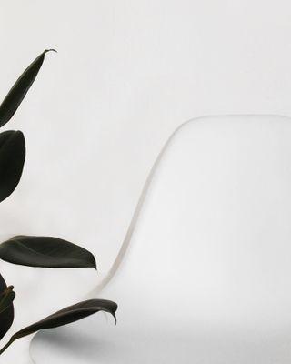 whiteinterior plantsathome plantstyle minimalismus chair vitraeames minimalshot ig_minimal berlin interiorinspo furnituredesigns minimallover minimalist minimalism home eameschair vitra furniture interiordesign interior