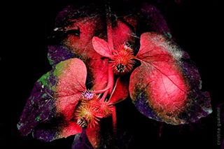 addicted_to_colors flora naturefineartphotography dream colorsmood fineartphotography dreamnature photooftheday botanical colorphotography photo_of_the_day canonitalia exhibition plant artmajeur instagood fineart austria saatchiart colourphotography naturememoriesanddreams