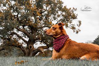autumn beautiful bestdog color cute cutedog dog doglover dogoftheday dogs dogsofinstagram dogstagram herbst hunde instadog instadogs instagramdogs pet petsofinstagram petstagram puppy puppylove saveyourview weeklyfluff