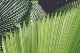 magazine35mm palm palmtrees plantsofinstagram palepalmcollection paperjournalmag beach iseeyourtalent alphaddicted art agameoftones artofvisuals aov