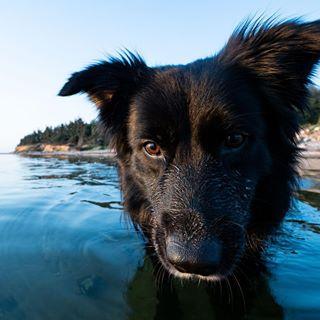 dog happydog photographer summer