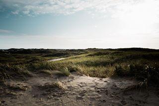 leicaqp denmark leicaq søndervig dunes shotonleica leica nature