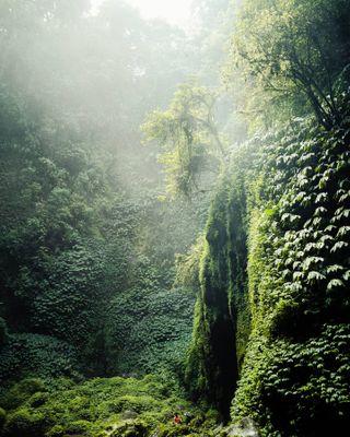 amazing artwork automotivephotography bali bali2019 balitravel earth explore green greenlife indonesia justkilling lifestyle nature naturelove nungnungwaterfall portraitohotography sonya7iii sonyalpha travel traveling vacation