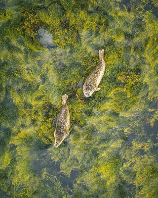 eclectic_shotz natureaddict aerialfilming stayandwander awards fromwhereidrone dji droneofficial polarpro mavic2pro earthfocus visualambassador planetearth droneglobe ourlonelyplanet captureperfection awesomeearth nature naturephoto outdoortones wildlife dronelife geostreet landscape drone milliondollarvisuals neverstopexploring beautifuldestinations