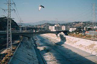 urban bird walk travel melanieziggel streetlife california roadtrip