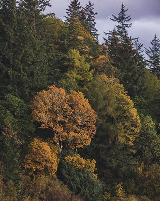 visitscotland smplecommunity travel autumncolours sonyphotography photooftheday eileandonancastle nature photography lightroom highlandsscotland roamtheplanet scotlandisnow seasonalwork adventure ig_scotland castlesofscotland scotland brilliantscotland simplyscotland autumn uk castle highlands hiddenscotland scottishcastles_
