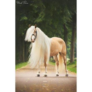 pferd horsephotographer equine postinghorses pferdestars featuremesophie lsr_feature hoofprintfeatures pw_080_post horse_skyliine cheval equinephotography pst_post hspost boewtds_unique horse pferdewettep bestofequines horsephotography equinephotographer poho_post woh_horsepost pfetri_post pony pferdeschoenheiten horsephoto hoskyspferde europaspferde postwelovehorsessx