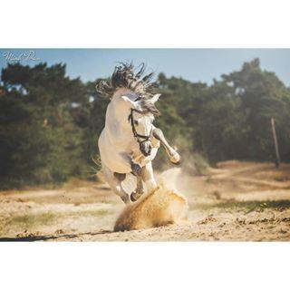 featuremesophie eqwtdsah paardenfotografie pferde horseshooting europaspferde horsesofinstagram horsephotographer paardenfotograaf beautifulhorse paard horse instahorse bestofequinephotography horsephoto eqwtdsdust pony equinephotography poho_post pferdeshooting cheval equinephotographer europeanhorse horsephotography bestofequines horses equine canon hoofprintfeatures lsr_feature