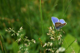 nikonua 500px foto nikond5600 бабочка природа profoto nikonukraine фото nikonphotography nikon professionalfotographer украина nature insect