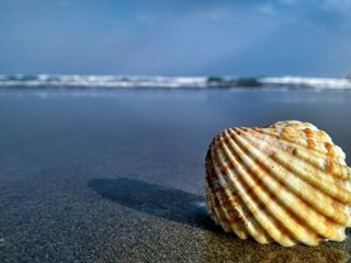 mariconcha bqaquarisuplus orilla vacaciones 1 blue concha summer photography mar
