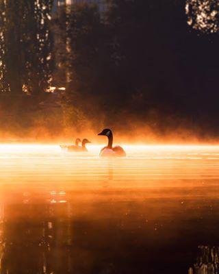 agameoftones artofvisuals ducks fog fogessentials foggy foggyday ig_color lake milliondollarvisuals mist mood moody moodygrams naturephotography nebel photography sea sunrise sunrise_and_sunset sunriseavenue sunrises sunset sunsets tones visualambassadors water weekly_feature