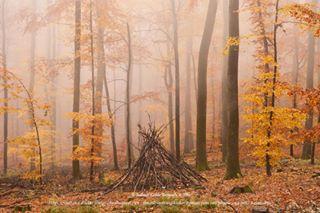 badenwuerttemberg deutschland europe germany heidelberg herbst indranilkishorfotografie kohlhof landscape nature november odenwald southgermany yellow