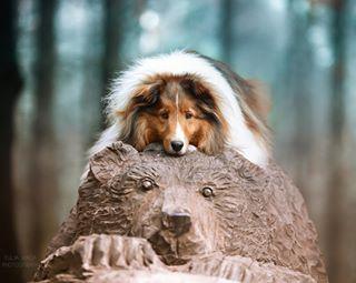 nikon_animal nikon_dogs nikon_d750 dogphotography nikon_russia nikon_анималистика nikon_jp