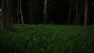 Portfolio Torreira's Cinematography photo: 1