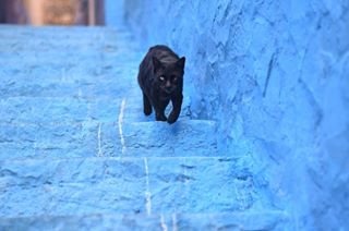 50mm 50mmlens amazigh chaouen chefchaouen chemel cityphotography culturephotography jellaba manphotography model morocco museum nikon nikond5300 northafrica photographer photography portrait portraitphotography qandora rif sahara streetphotography sunset sunsetphotography tetouan travel travelphotography vsco