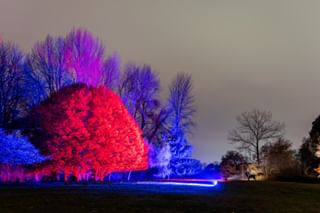 photography londonphotography trees syonpark photographylondon london neon photographer