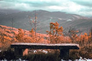 amazing_shots autumn color naturelover photography photographyart shotsshotsshotsshots shotz_of_italia timmyro91