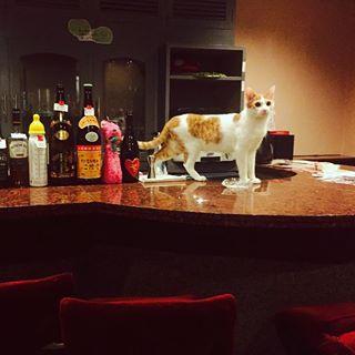 bar cat catbar cocktails japan nightlife tokyo travel travelblogger travelphotography