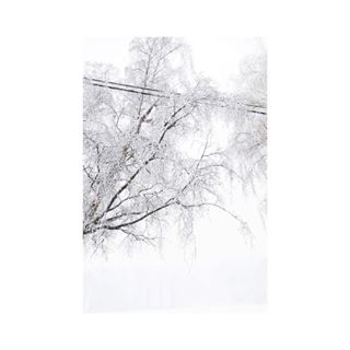 white closedeyes winter cold belgium bachelorproject minimal snow 500px childabuse minimalzine finalproject canonbelgium abstract canon6d bnw trees fotografie taboo minimalistic kdg lines childneglect photography conceptualart conceptual photographer