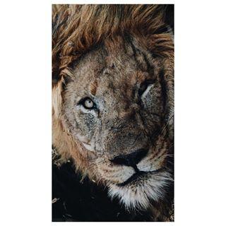 sonyalpha wildlifephotography southafrika wildlifephotographer safari sonya6500 iloveafrika