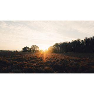 edelhert heide camping sunset
