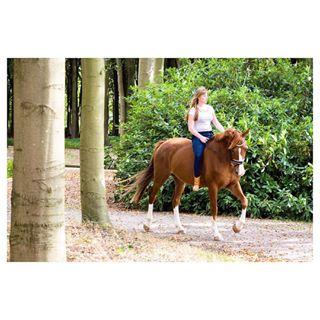 yvettesminkfotografie woods kwpn horsesofinstagram horse canon