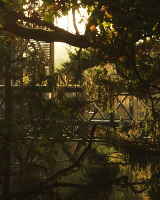 lightmagic stillness lookout 💚🌳☀️🌲💚 europeanjungle wonders sunset pineforrest glowinglight lietuva fall anykščiai myliumiska 💚 goldenlight miškas 🌲🌳 autumn watchtower treecannopy forrest