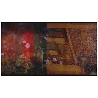 neon theamsterdamseriescontinues doubleexposure neonlight nes pentaxme rosegarden citylights vondelpark favouriteplaces ishootfilm pentax 35 fujifilmc200 filmphotography filmisnotdead