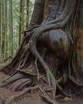 Portfolio Nature photo: 2